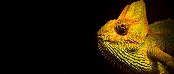 Afbeelding kameleon