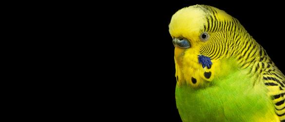 Afbeelding vogel