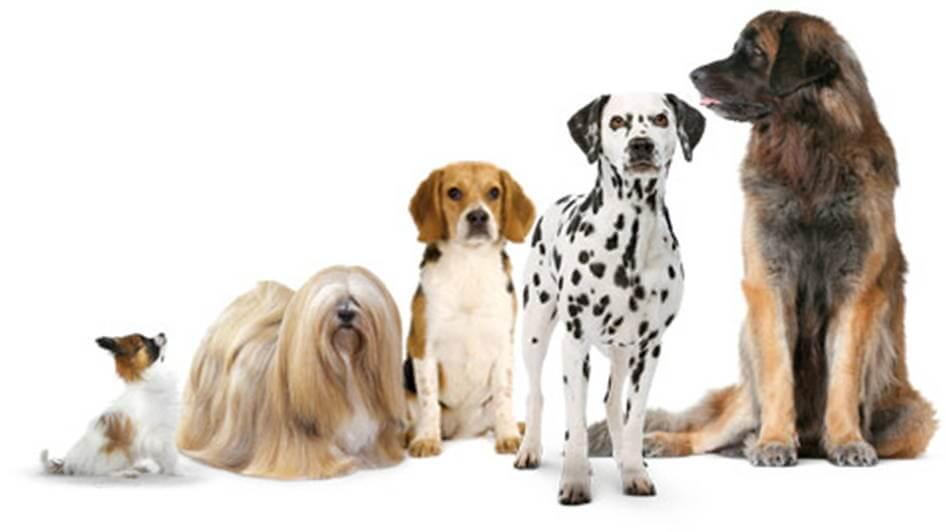 Afbeelding verschillende honden grotes