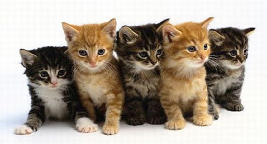 Afbeelding kittens