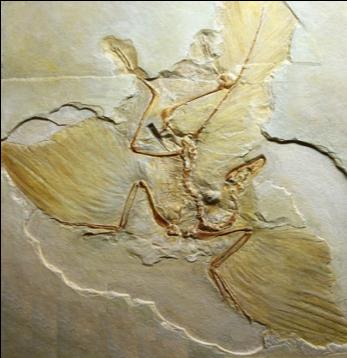 Afbeelding fossiel